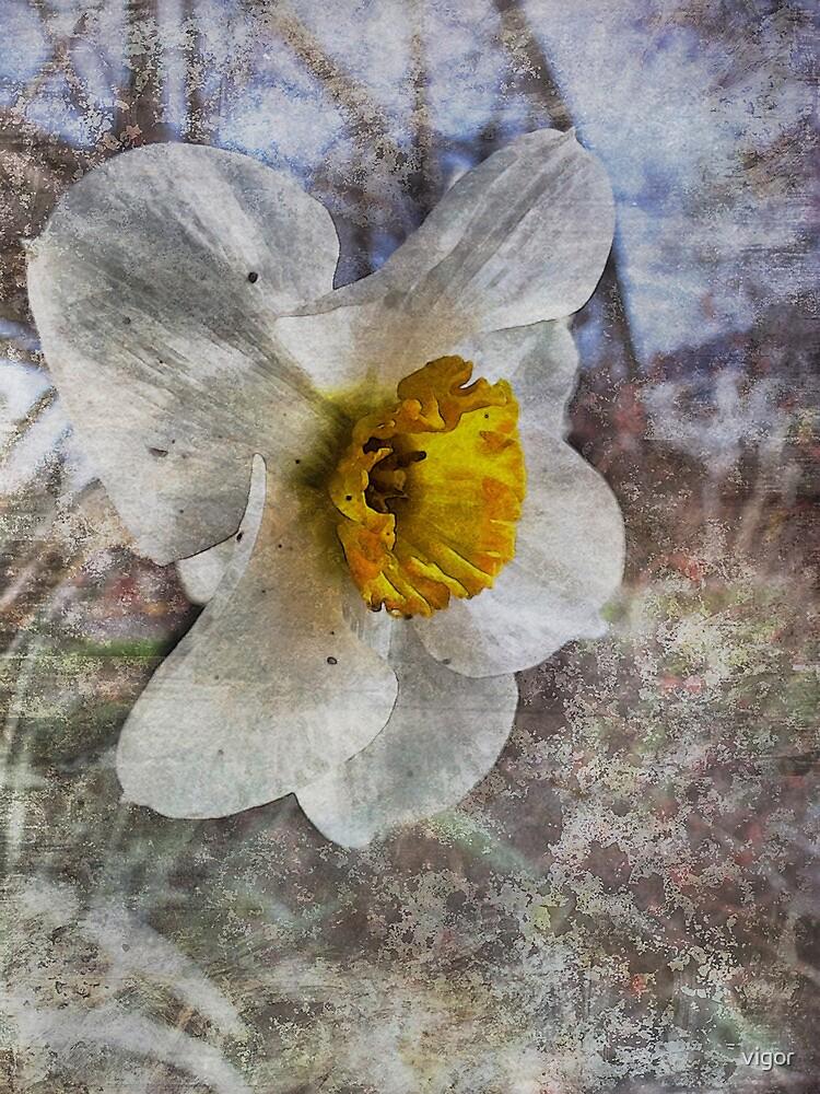Daffodil in Grunge by vigor