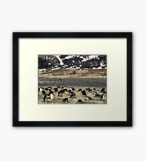 Explorers and Penguins Framed Print