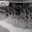 Fugu to you too - Japan by Norman Repacholi
