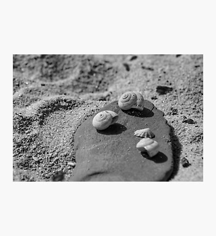 Shells On A Stone Photographic Print
