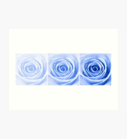 Blue Rose with Water Droplets Triptych Art Print