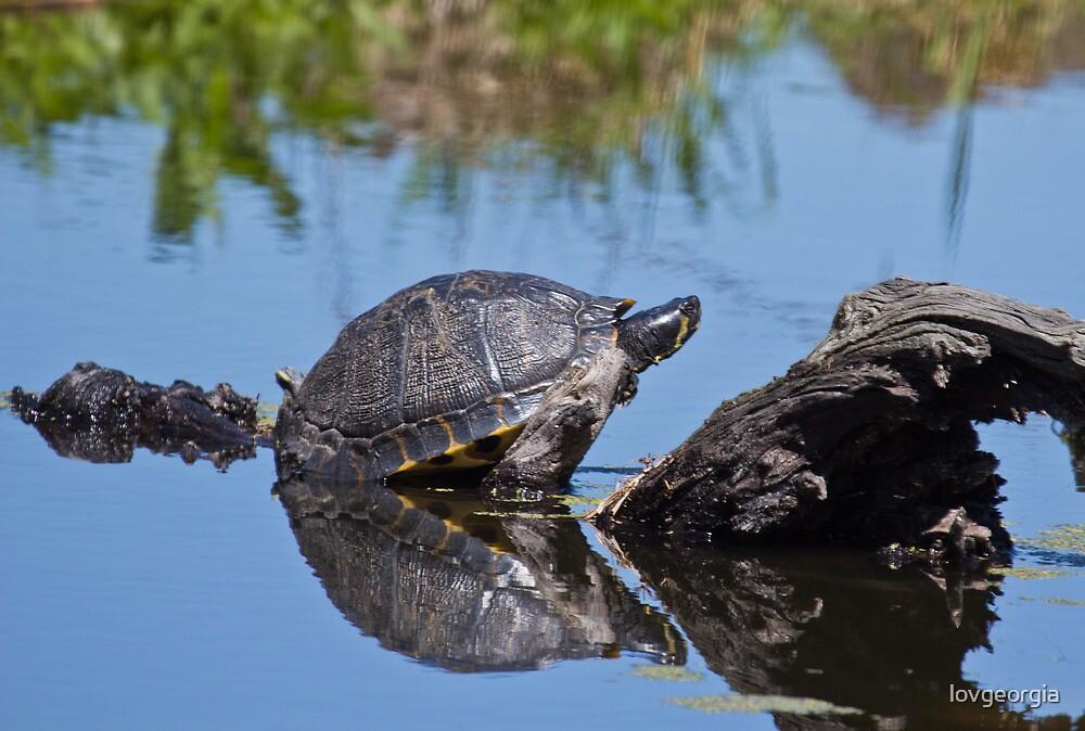 Turtle by Brenda  Meeks