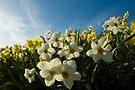 Field of flowers by Matthias Keysermann