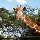 Oscar the Giraffe by mdench