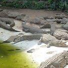 Alligators will snap by mdench