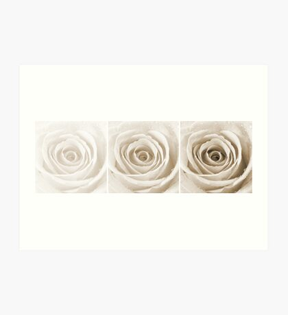 Sepia Rose with Water Droplets Triptych Art Print