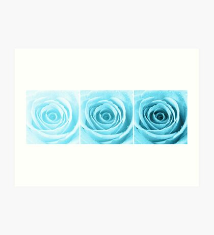 Turquoise Rose with Water Droplets Triptych Art Print
