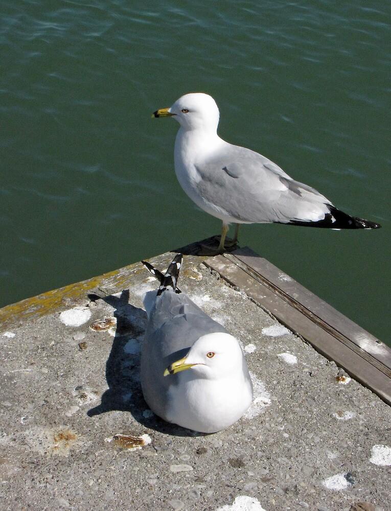 Love Gulls by nikspix
