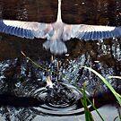 Great Blue Heron Taking Off - Beauty In Motion by Jane Neill-Hancock