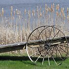 Cat Tails & Wagon Wheels by nikspix