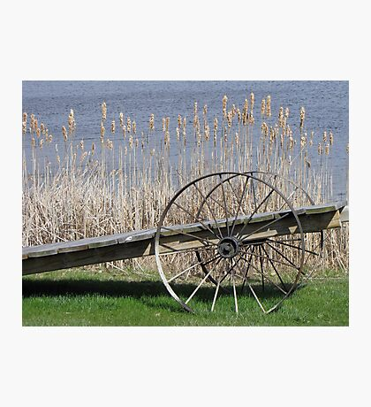 Cat Tails & Wagon Wheels Photographic Print