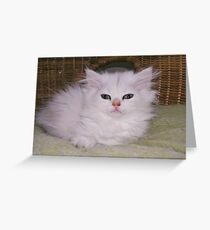 my eyes are still sooooo heavy....miauw! Greeting Card