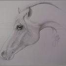 Arabian Beauty by Noel78