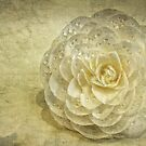 Camellia by Heather Haderly