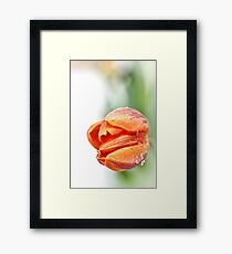 Sweet, but with a little attitude... (2) Framed Print