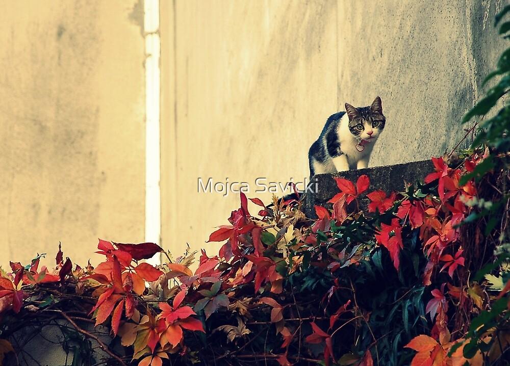 Curiosity... by Mojca Savicki
