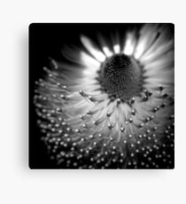 Form Forever Follows Function Canvas Print