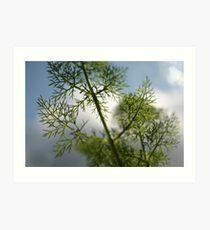 fennel Art Print