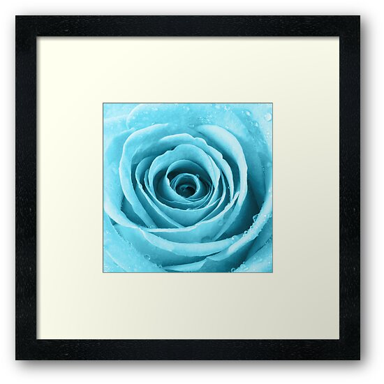 Turquoise Rose with Water Droplets by Natalie Kinnear