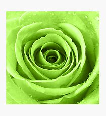 Lime Green Rose with Water Droplets Photographic Print