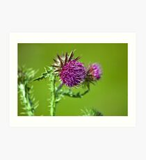 Thistle flower Art Print