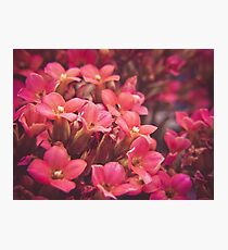 Sea of Pink Photographic Print