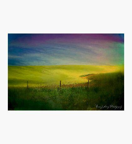 Canola Dreams Photographic Print
