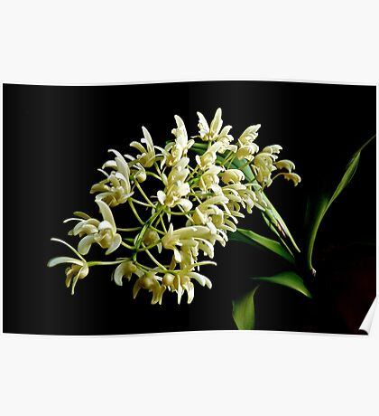 "Native Elegance: small Australian ""bush"" orchid Poster"
