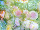 Rainbow Bouquet 2 by Stephanie Bateman-Graham