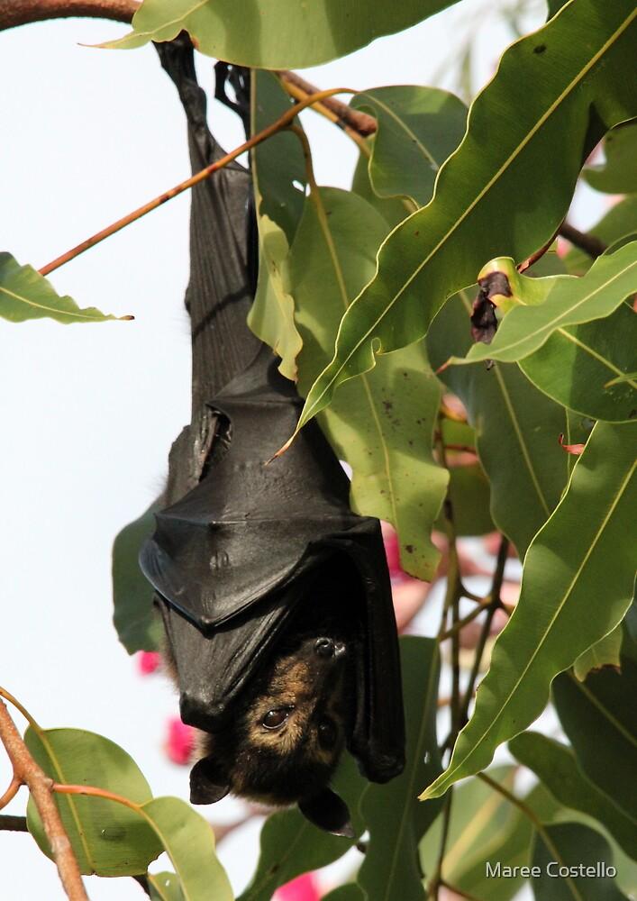 batty by Maree Costello
