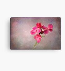 Pink Wallflower Canvas Print