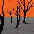 Dead Vlei Tree Skeletons by Jill Fisher
