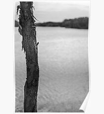Trunk by Lake - Lennox Head Poster