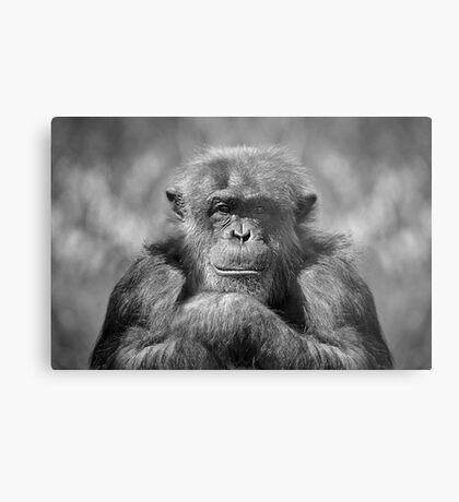 Chimp Metal Print