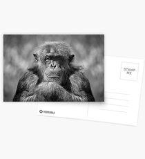 Chimp Postcards