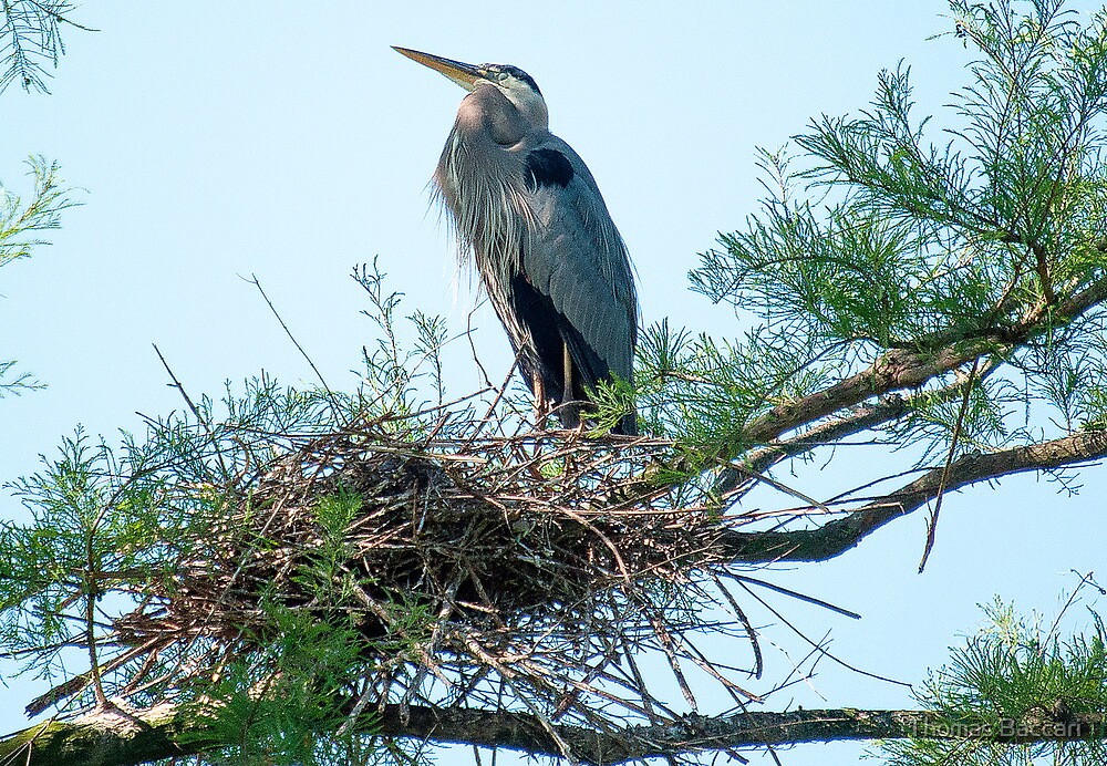 Supreme Ruler of the Nest by TJ Baccari Photography