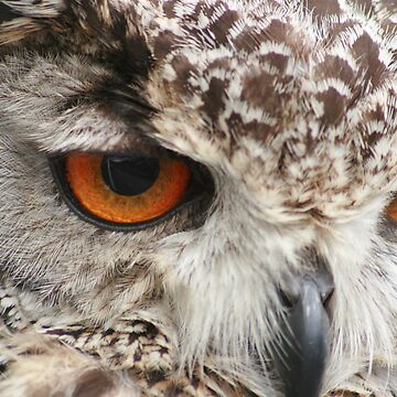 Owls Eyes by GlennR