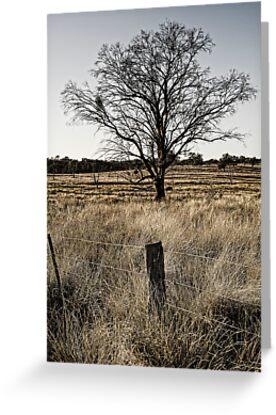 Paddock  (Bonshaw, NSW) by Julia Ott