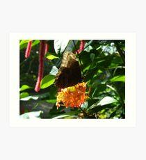 Owl Butterfly on Bright Orange Flower Art Print