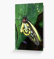 Colors of the Rainbow Butterfly Greeting Card