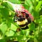 BEES WASPS ON RED, GREEN WHITE FLOWERS/FOLIAGE OR OBJECTS