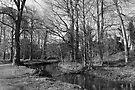 Park Landscape - Bute Park, Cardiff by Artberry
