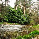 Warburton trail by Louise Delahunty