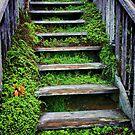 Weathered Stairway by Barbara  Brown