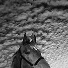 """""""Emilys' Horse"""" by Raymond Kerr"""