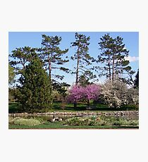 Trees in Spring Photographic Print