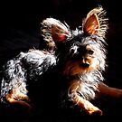 Sunbathing by Grinch/R. Pross