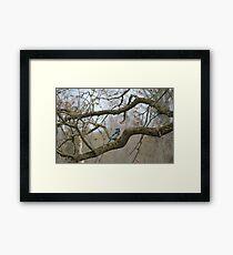 Posin Framed Print
