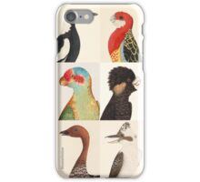Australian birds iPhone Case/Skin