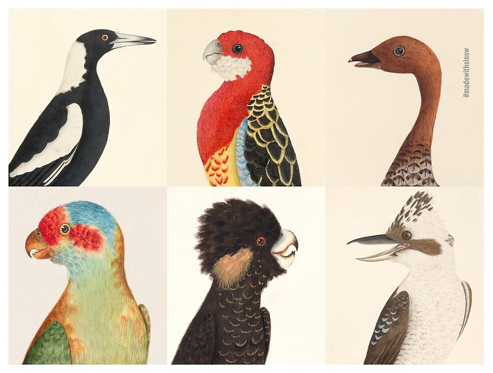 Australian birds by madewithslnsw